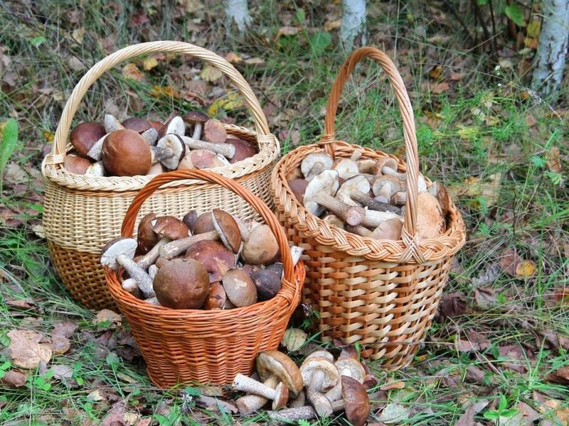 ВВоронежской области 20 человек отравились грибами в текущем 2017-ом году